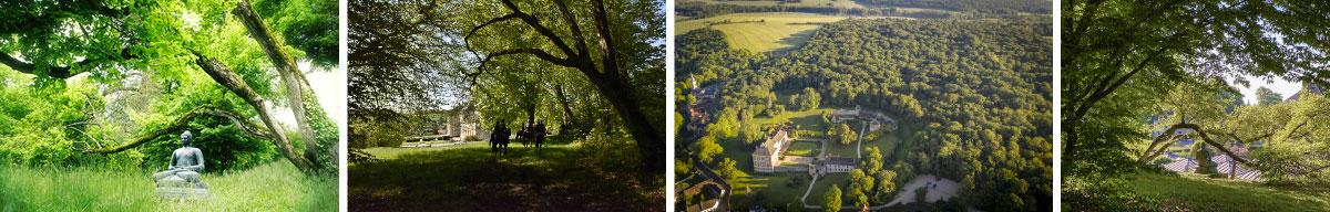 forêt du château